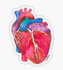 Anatomisches Herz Transparenter Sticker