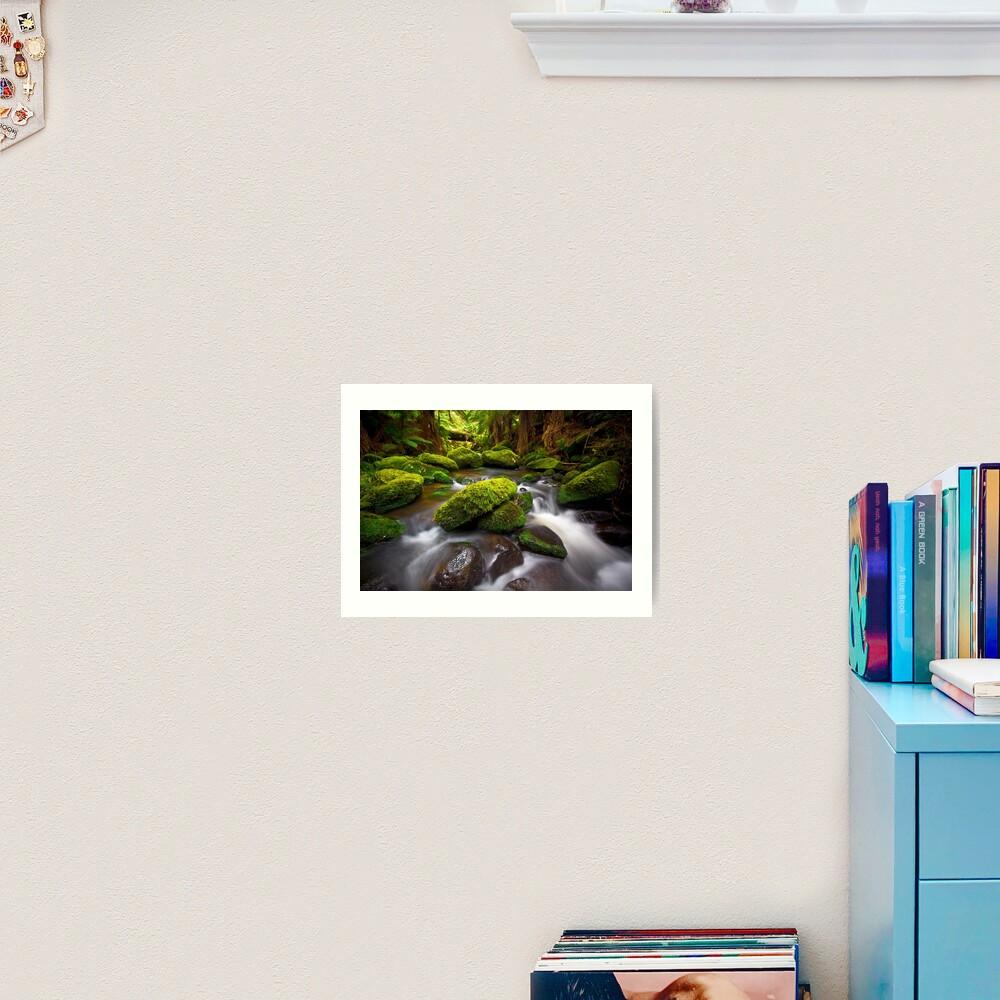 Otways Rainforest Art Print