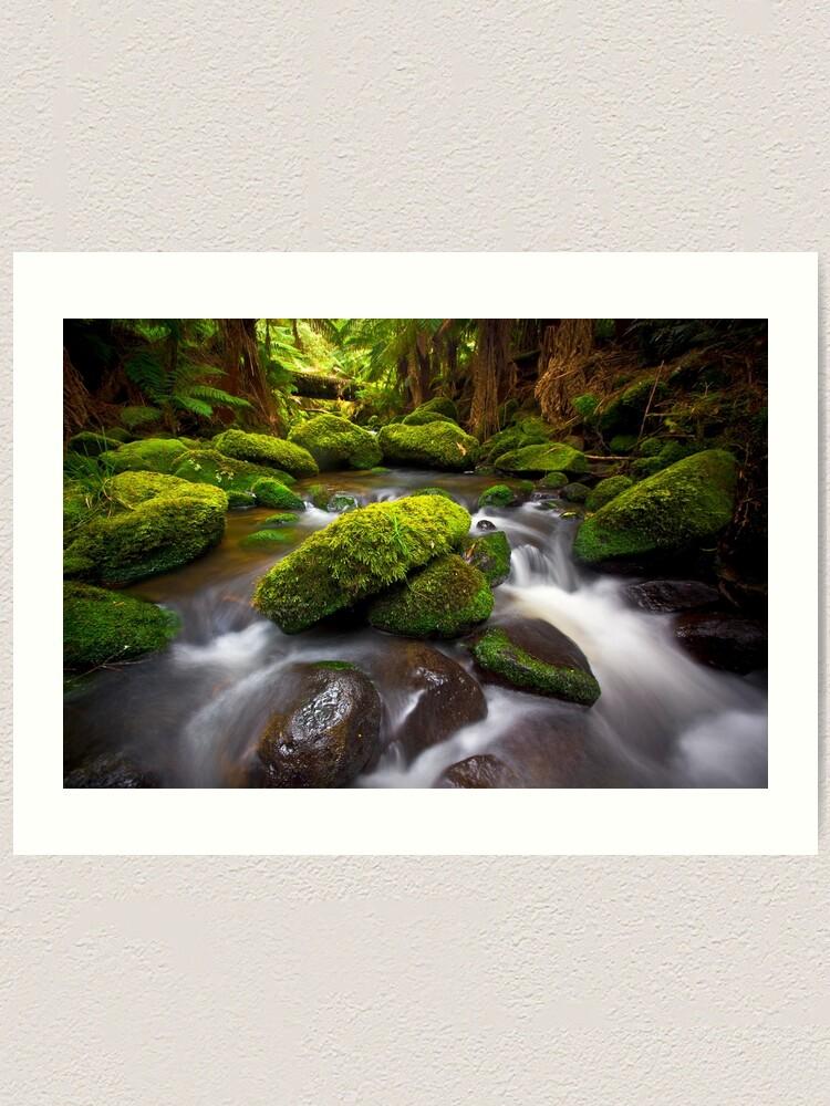 Alternate view of Otways Rainforest Art Print