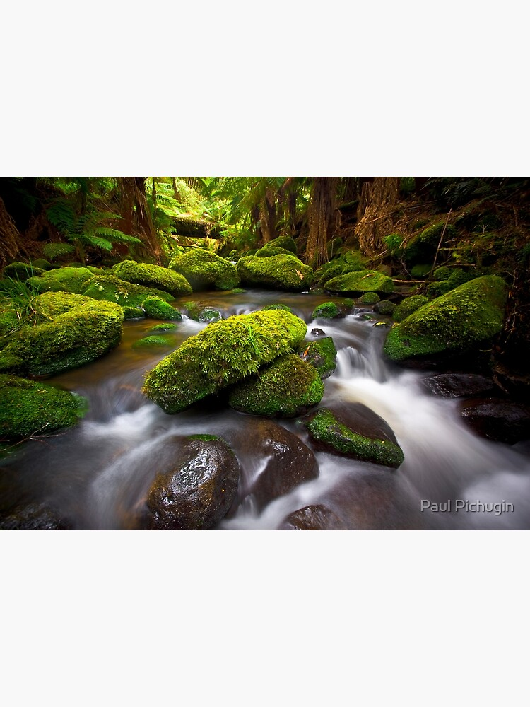 Otways Rainforest by paulmp
