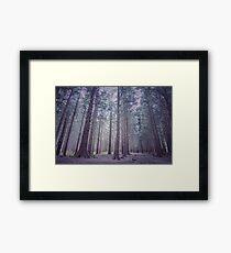 PURPLE FOREST Framed Print