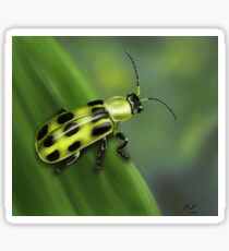 Spotted Cucumber Beetle Sticker