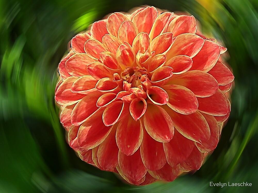 Dahlia - orange by Evelyn Laeschke