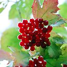 Natural World - Red Berries by markchadwick