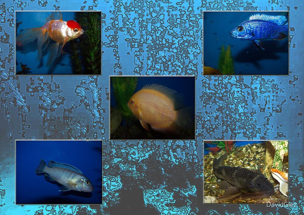 In aquarium by DavidGlez