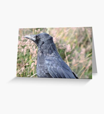 Bore Black Feathers Greeting Card