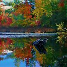 Many colors of New England by LudaNayvelt