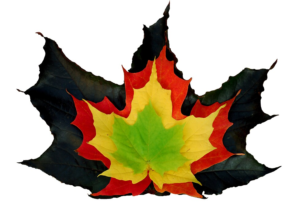 Colours of Fall by Robert Goulet