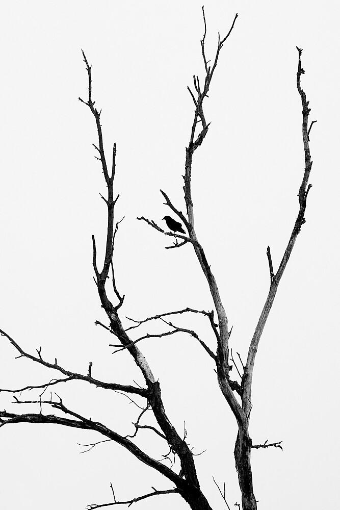 Crow by Jeff Harris