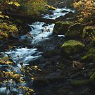 Golden Autumn Cascades by Brandt Campbell