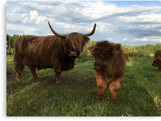 Scottish Highland Cattle Cow and Calf 1185 by SaarelaHighland