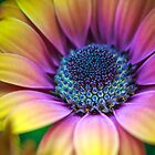 Anybody else need their day brightened? by alan shapiro