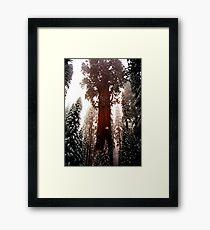 """General Sherman"" Sequoia National Park California Framed Print"