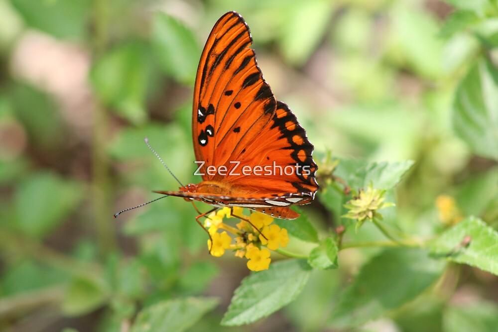 Agraulis vanillae butterfly by ZeeZeeshots
