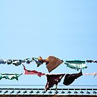 Hanging laundry  by Anna Lemos