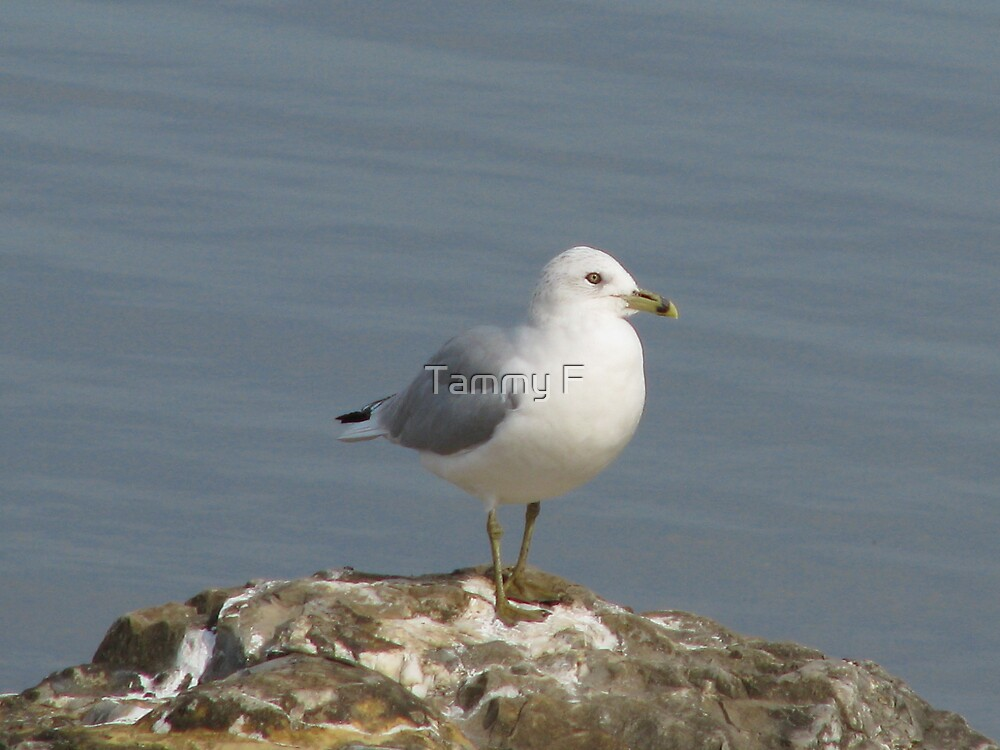 Gull out of Water by Tammy F