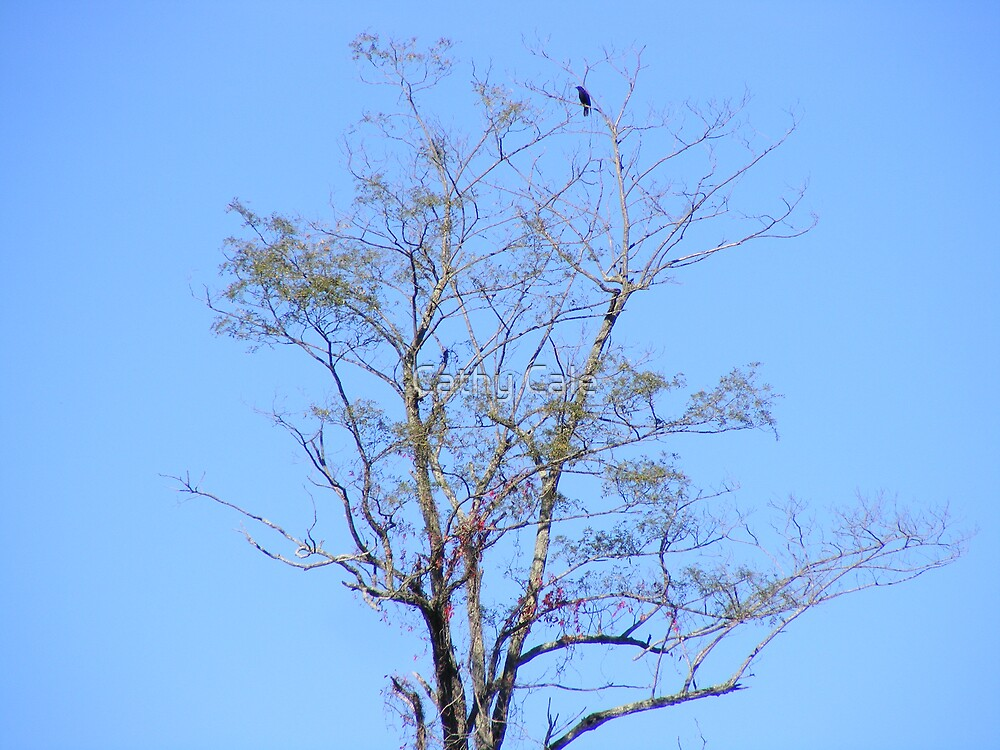 A Bird in a Tree is worth....???? by Cathy Cale