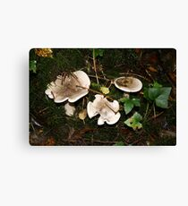 Fungi in Coole Park 1 Canvas Print