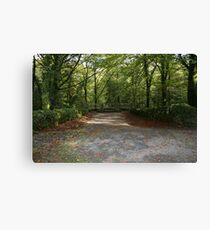 Coole Park wood Canvas Print