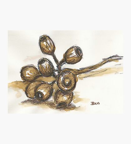 Scribbly Gumnuts Photographic Print