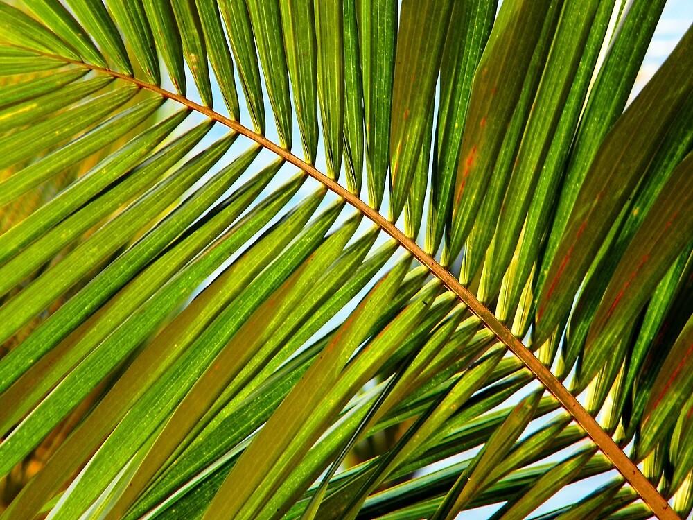 Palm Leaf by Debbie Oppermann
