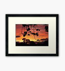 Setting sun in the bush. Framed Print
