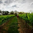 Lost in Patrick Plains - Hunter Valley by Dave Reid