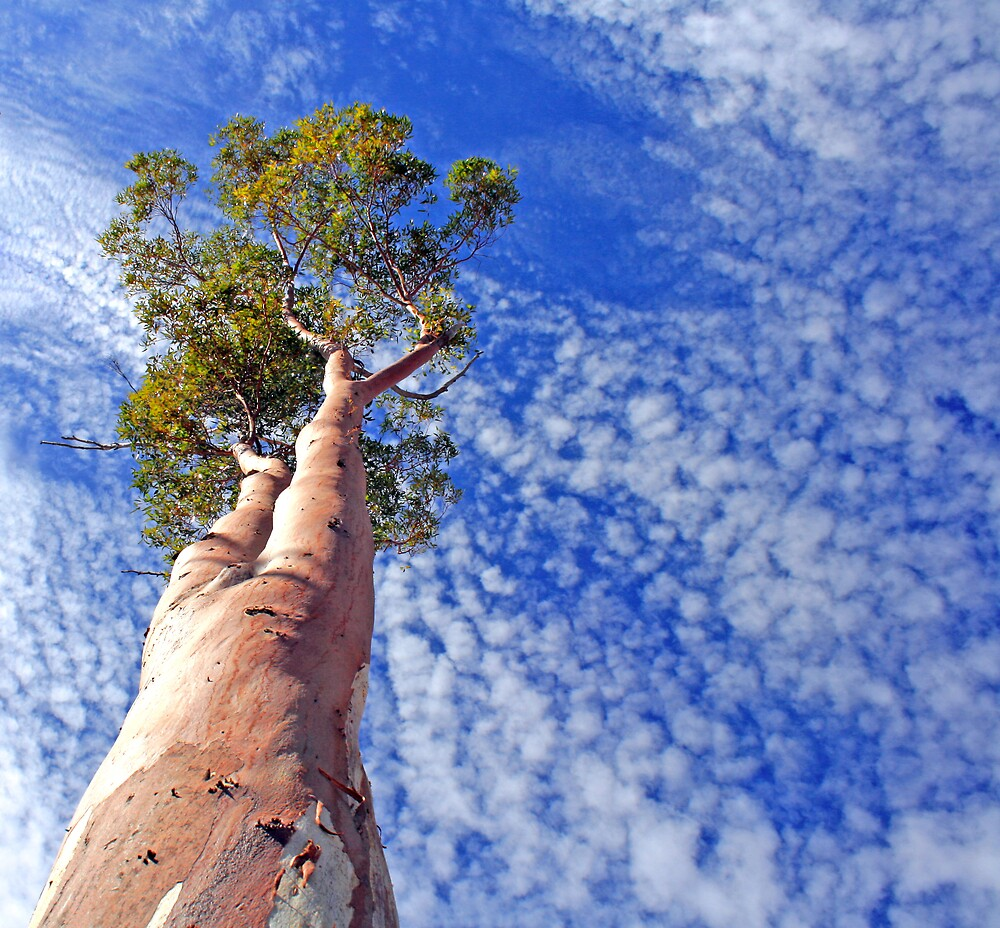 outback tree against sky by Peter  Middleton