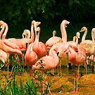 flamingo 2 by ghenadie