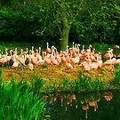 flamingo 3 by ghenadie