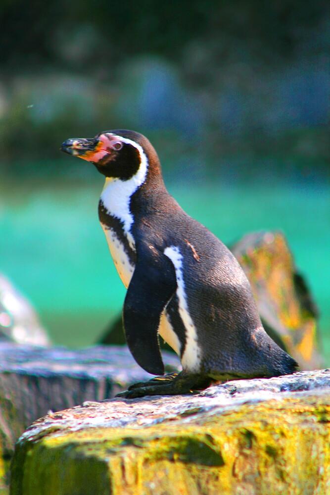 pinguin 1 by ghenadie