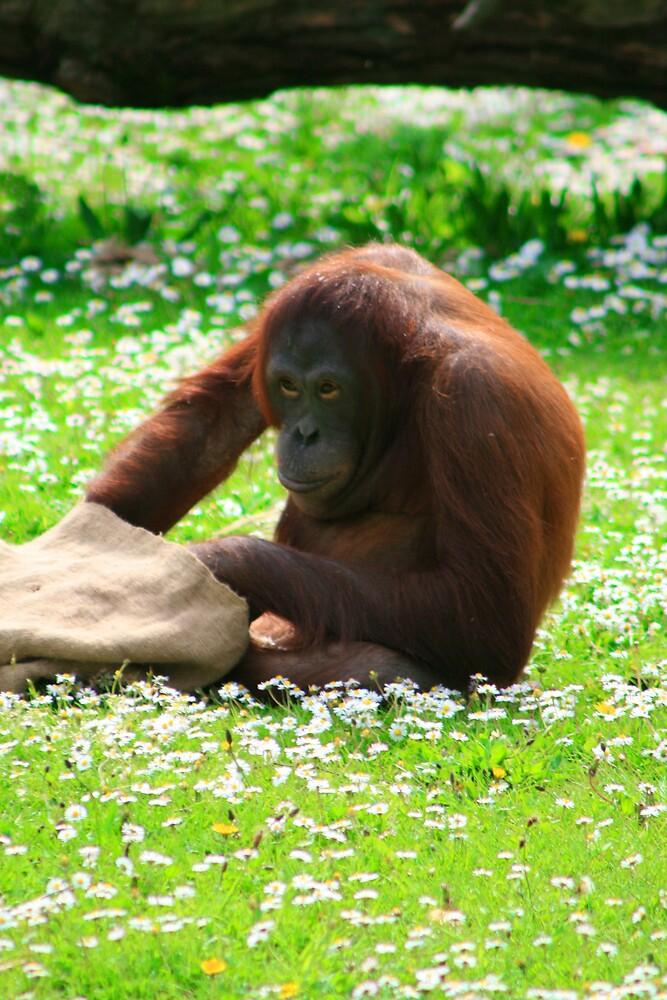 monkey 2 by ghenadie