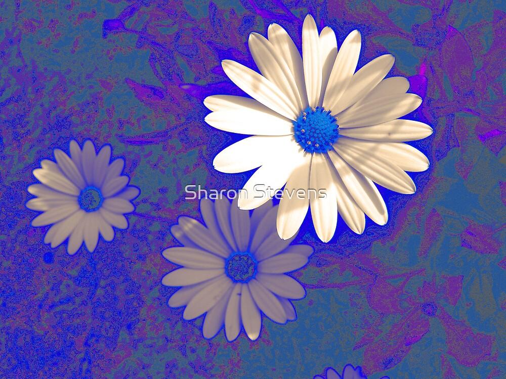 Daisy Blue by Sharon Stevens