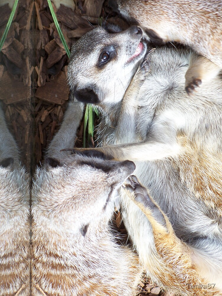 Playful little meercats by Tamika87