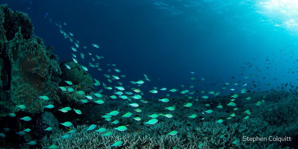 Reef scene panorama by Stephen Colquitt