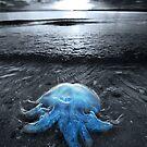 Cordon Bleu by Garry Schlatter