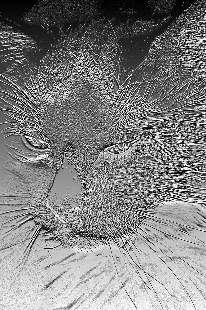 kitkit crome by Roslyn Lunetta