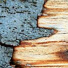 Bark stalagtite by mindfulmimi