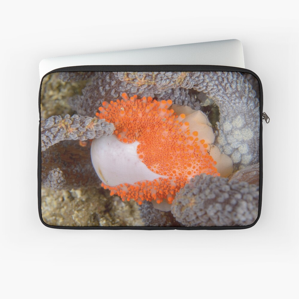 Golden Egg Cowrie - Ovula costellata Laptop Sleeve