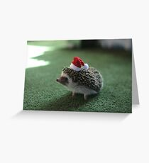 Cute Hedgehog Greeting Card