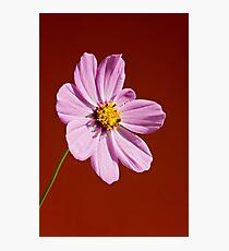Macro pink flower Photographic Print