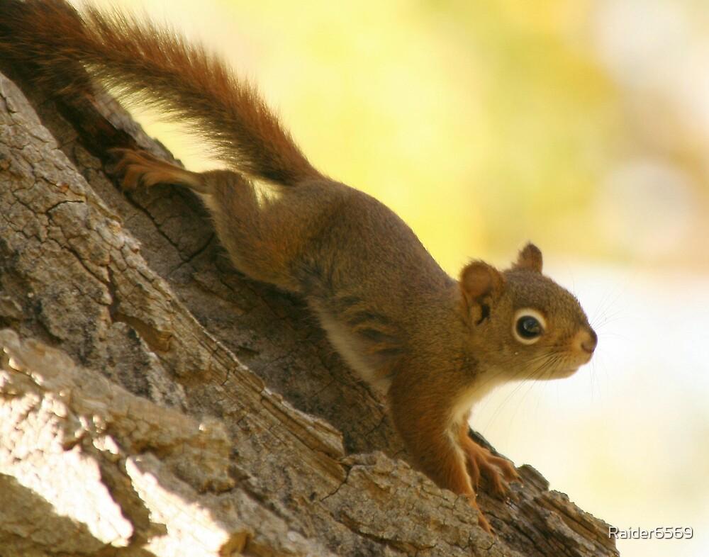 Red Squirrel by Raider6569