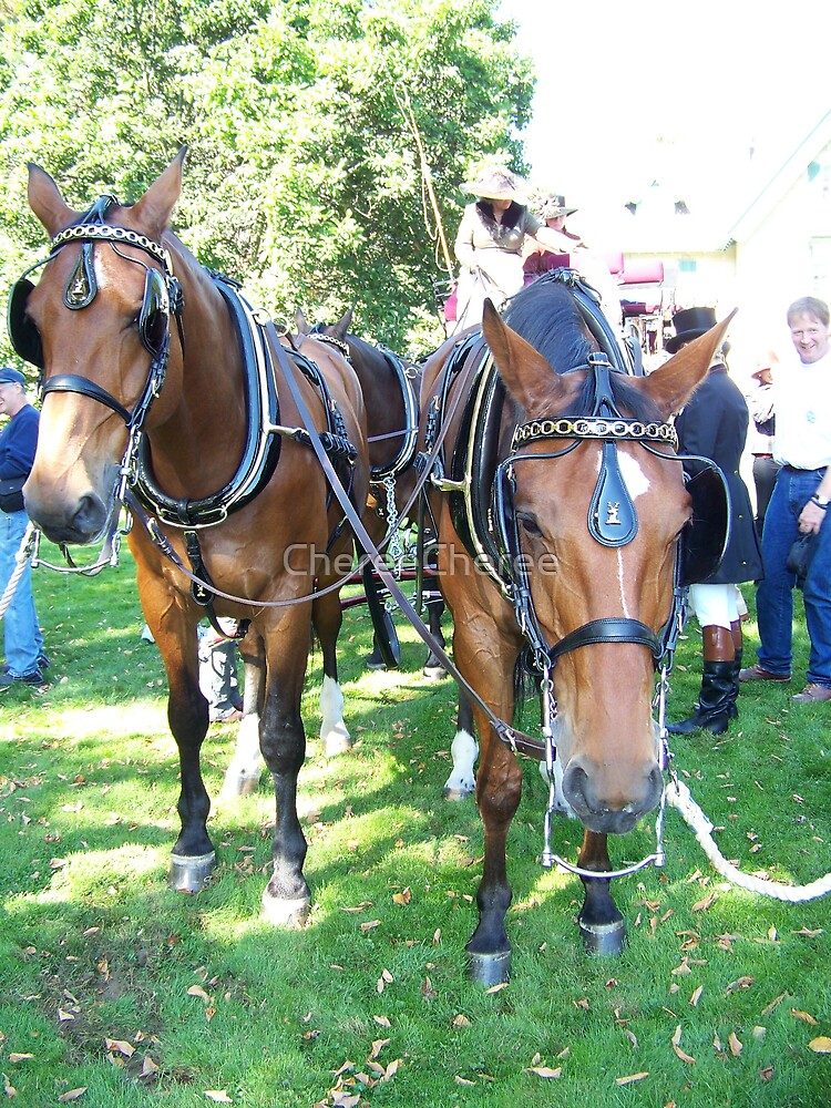 Waller Horse Team by ChereeCheree
