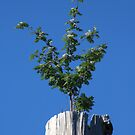 One Lonely Tree by AnnDixon