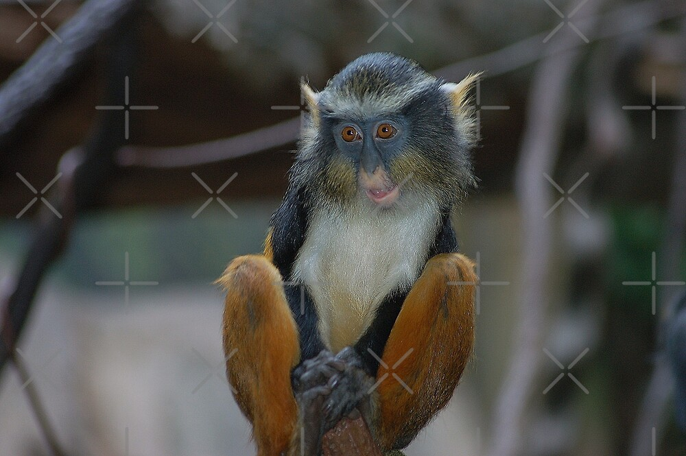 The Wolf's Guenon  by loiteke