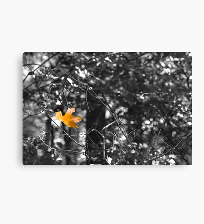 So Long Sweet Summer Canvas Print