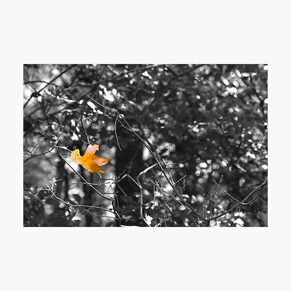 So Long Sweet Summer Photographic Print