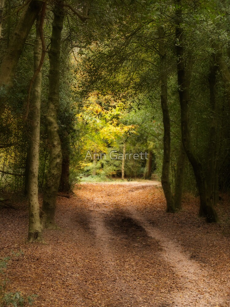 Autumn Path by Ann Garrett