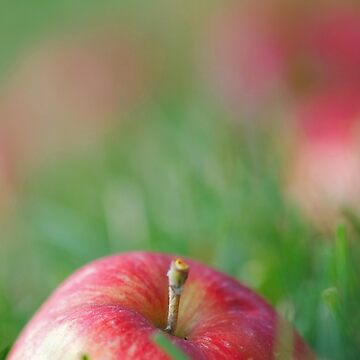 Fallen Apples by LisaKnechtel