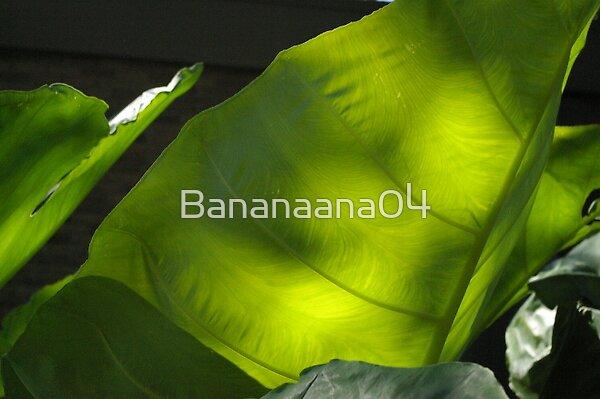 elephant ears  by Bananaana04